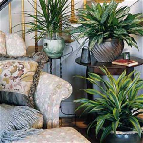 house plant ideas decoration plants with indoor plants decoration ideas