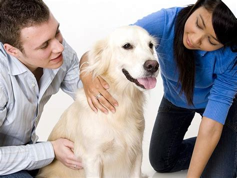 trained therapy dogs therapy dogs
