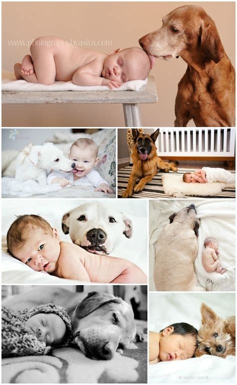 babies and dogs the myth about babies and dogs just puppys and