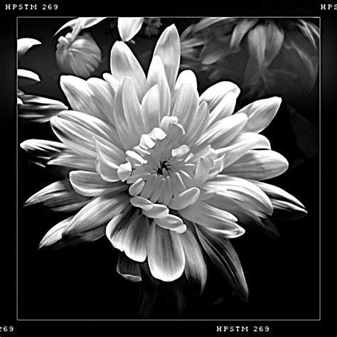 foto fiori bianco e nero auguri fantasticailly buon compleanno elsa duilio