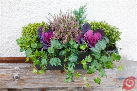 fiori da davanzale composizioni floreali per le fioriere invernali