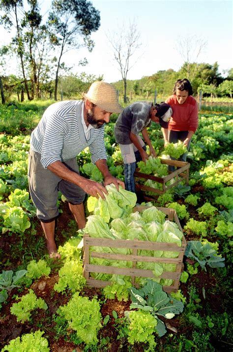 alimento organico feira mostra for 231 a e potencial da agricultura org 226 nica