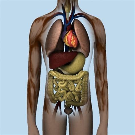 Human Organs 3d Model