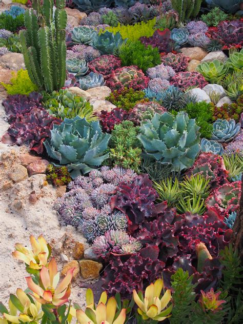 Succulent Gardens Ideas Such A Simple Idea A Coral Reef Garden Of Dazzling