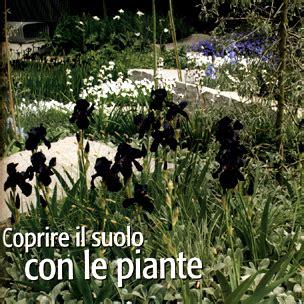 Piante Tappezzanti Sempreverdi Calpestabili by Coprire Il Suolo Con Le Piante