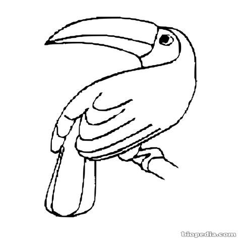 dibujos de animales en peligro de extincion para colorear imagui aves para colorear biopedia dibujosparacolorear