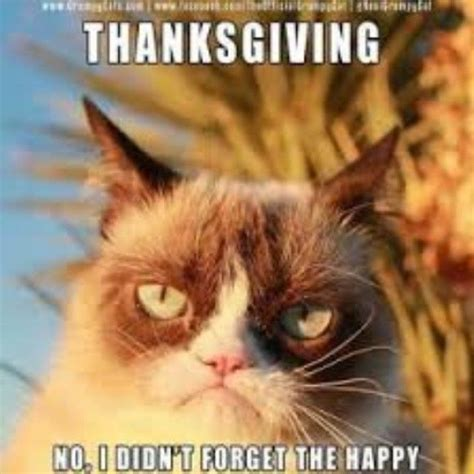 Thanksgiving Memes Tumblr - thanksgiving grump cat pictures photos and images for