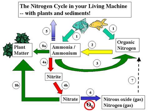 Nitrogen Cycle Worksheet by Nitrogen Cycle Diagram Worksheet Lesupercoin Printables