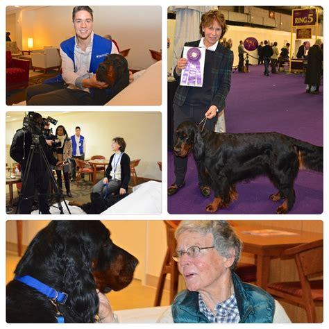westminster show on tv duke therapy receives winners award at 2015 westminster show featured on wncn