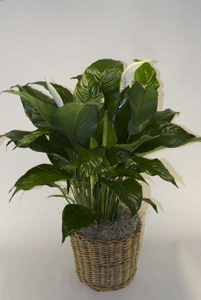 houstons  indoor plant pot store closet plant