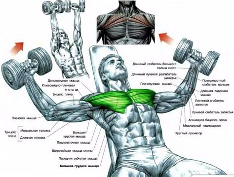 what does incline bench press work what muscles does incline bench press work 28 images incline barbell bench press
