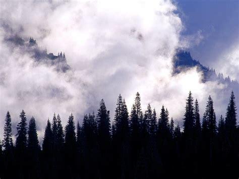 foto foto pemandangan hutan  alami ukuran besar