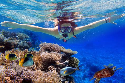 for snorkeling snorkeling tours serenity charters