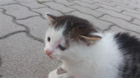 katze suchen ein zuhause baby katzen suchen ein liebevolles zuhause 904345