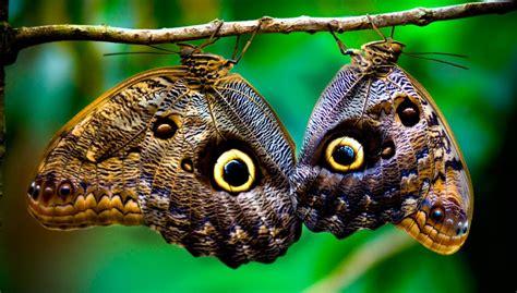 imagenes sobre mariposas clases de mariposas im 225 genes y fotos