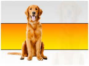 beautiful dog ppt template by templatesvision com