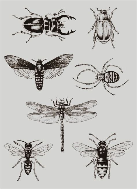 bug tattoos best 25 insect ideas on bee