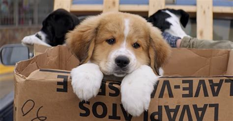 se filmer a dog s purpose resenha 4 vidas de um cachorro