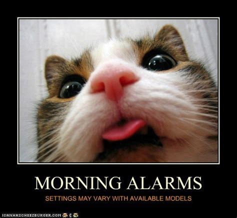 Alarm Meme - the wake up call way of cats blog