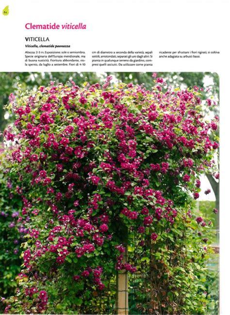 piante interne piante ricanti 232 il libro giusto se cerchi consigli