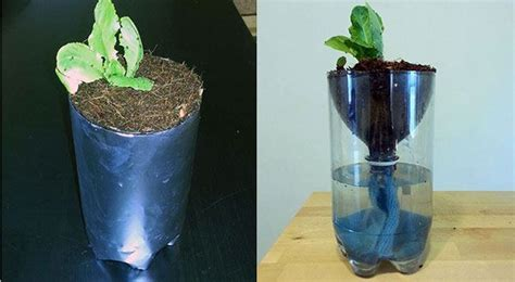 hydroponics  kids build   liter bottle garden