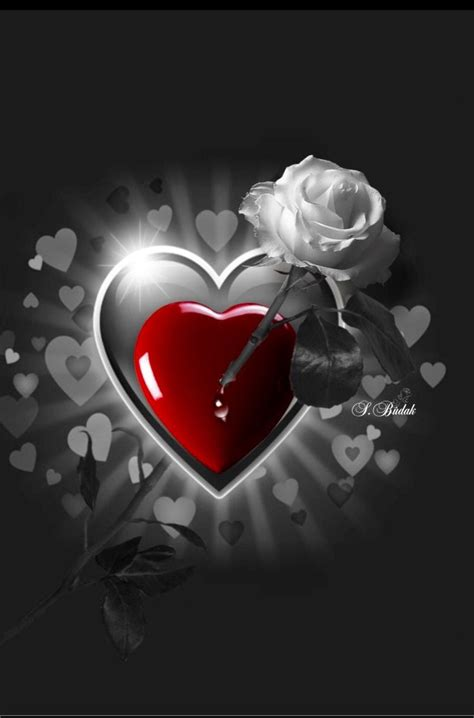 love roses  red photo heart wallpaper love