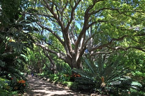 Kirstenbosch Botanical Gardens Entrance Fee Kirstenbosch Botanical Gardens Entrance Fee Kirstenbosch National Botanical Gardens Cape Town