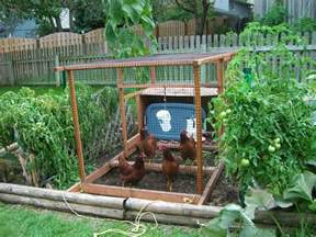 backyard vegetable garden house design with chicken coop and wire cover ideas