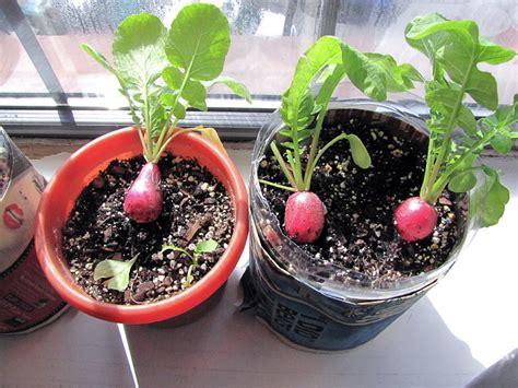 12 Healthy Vegetables And Herbs To Grow Indoors The Self Indoor Gardening Vegetables