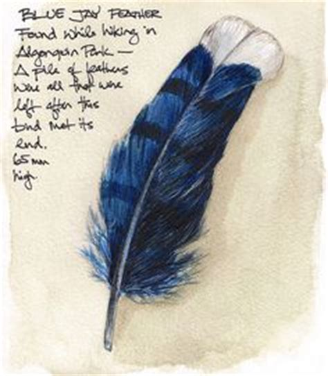 blue jay tattoo meaning 1000 images about feathers etc on feather