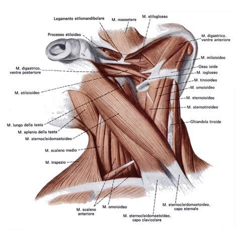 esercizi cervicale mal di testa per il collo esercizi per eliminare il dolore