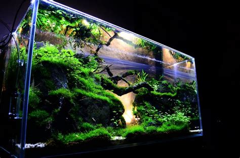 modern aquarium design with aquascape style for new