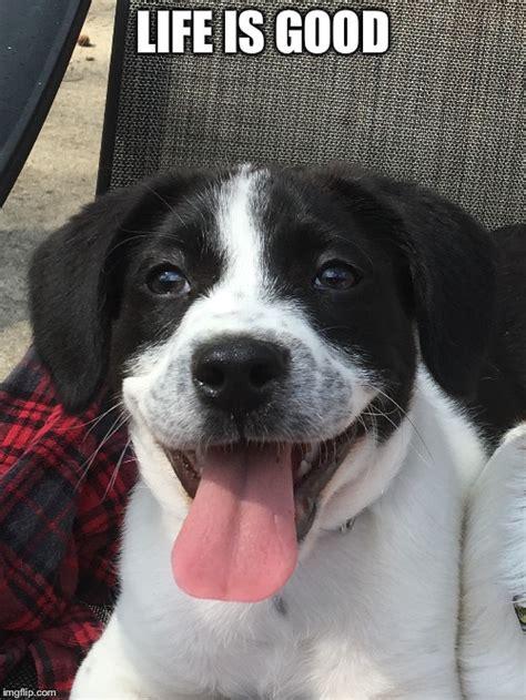 Life Is Good Meme - smiling dog imgflip