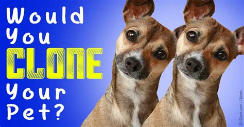 clone your now you can clone your beloved pets