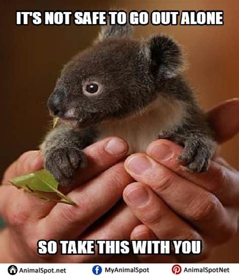 High Koala Meme - koala memes