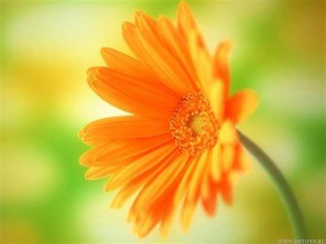 astro flower flower tj