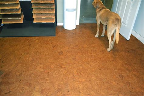 Best Flooring With Dogs Best Flooring For Dogs Corner