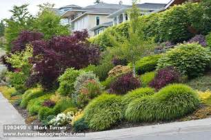 small bushes for landscaping 1203498 grasses shrubs small trees in front yard garden