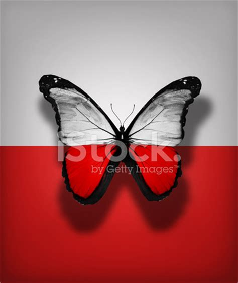 Korean Creativity Fashion National Flag Pu Leather Outside Sd586c flag butterfly isolated on flag background stock photos freeimages
