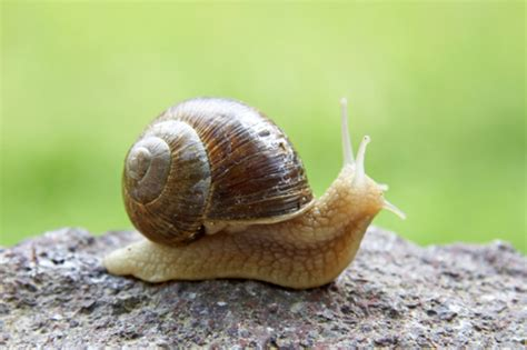 Snail L by In Bloom Accomplishing Stuff And Snails
