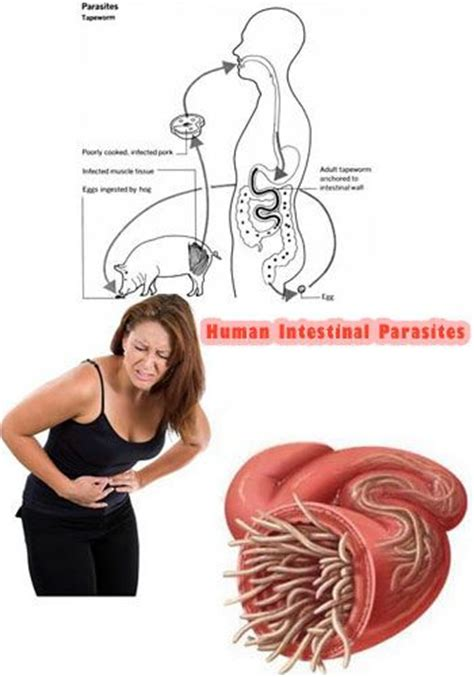 Detox Of Intestinal Worms In Humans by 1000 Images About Parasites On