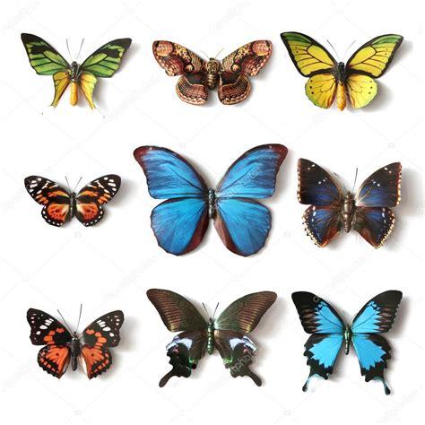 imagenes de vomitando mariposas colecci 243 n de insectos disecados de la mariposa fotos de
