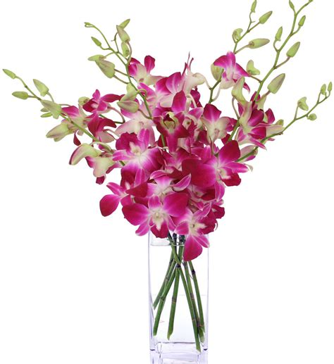 fiori canada simply orchids 183 sympathy arrangements 183 canada flowers