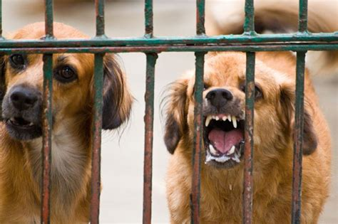 when can puppies get rabies rabies how to keep your child safe happy healthy children