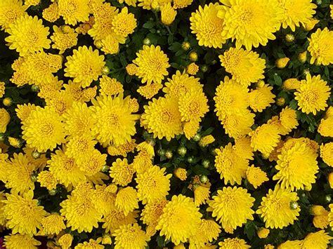 wallpaper bunga kecil gambar wallpaper bunga bunga kecil gudang wallpaper