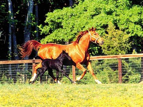 imagenes increibles de caballos fondos de impresionantes caballos fondos de pantalla de