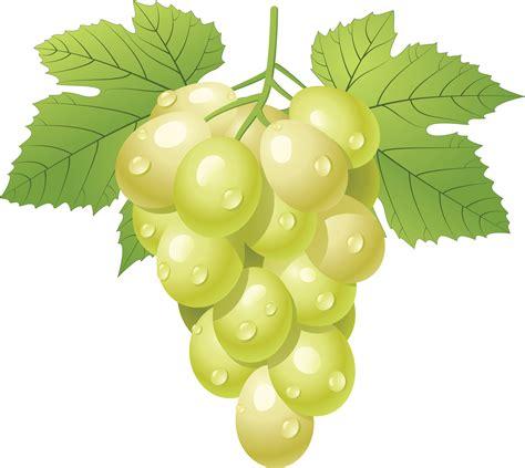 grapes clipart grape fruit clip art downloadclipart org