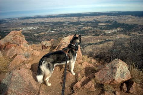 hiking dogs 10 dogs that are wondering why you aren t hiking with them