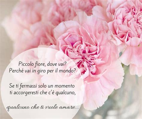 piccolo fiore dove vai song piccolo fiore dove vai by i teppisti dei sogni
