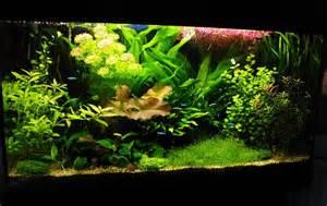 aquarium planted aquarium techniques